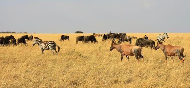 The Masai Mara plains