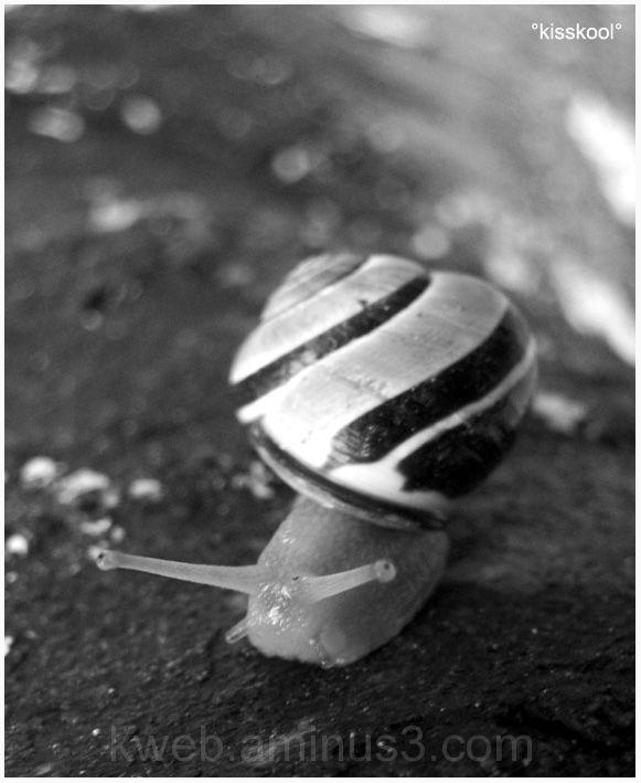 escargot en noir et blance, mai 2009