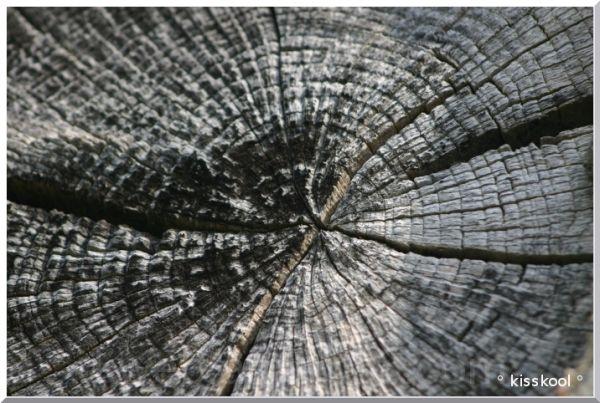 bois coupé et vieilli