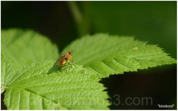 insecte de mon jardin, mai 2009