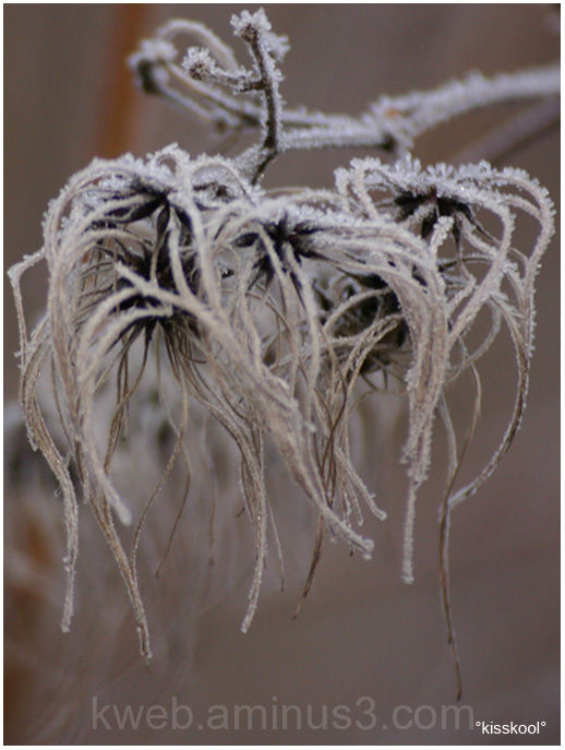test macro arbuste gelé, Février 2009