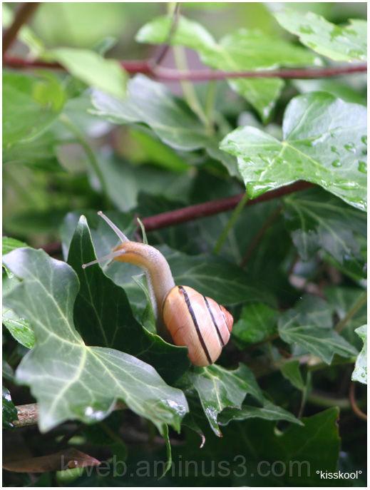 escargot dans un jardin, mai 2009