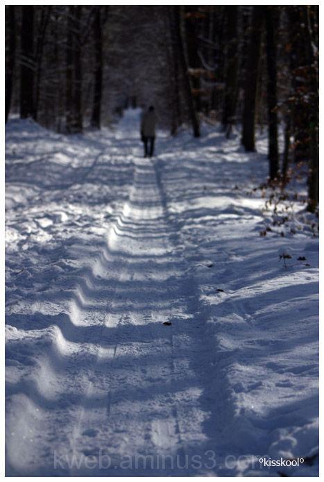 chemin de forêt enneigé (décembre2009)