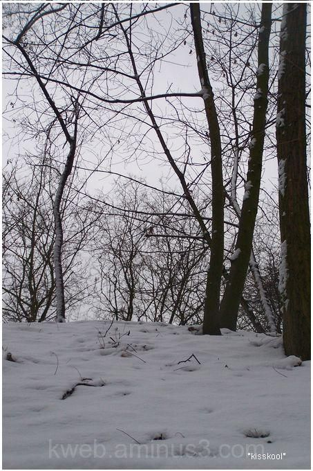 foret enneigee, pologne (janvier 2010)