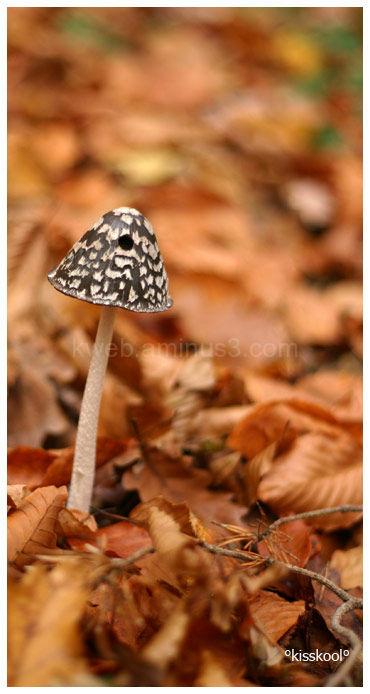 Champignon, forêt de Sorques (décembre 09)