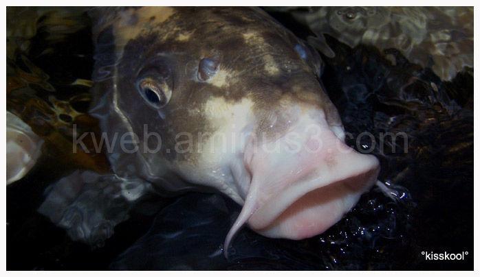 poisson, bassin (déczembre 2009)