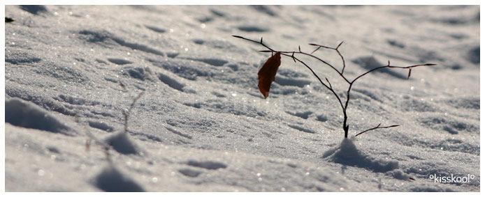 neige en forêt (décembre 2009)