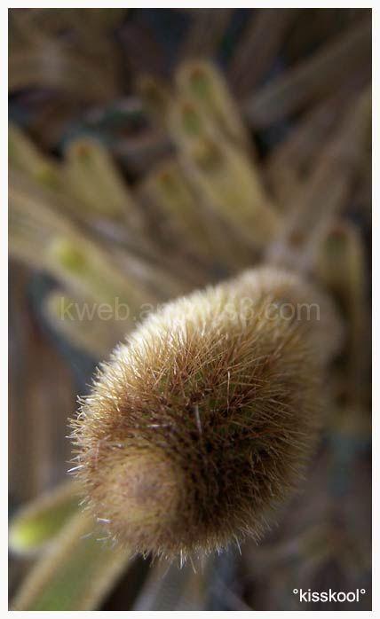 cactus dans jardin bontanique (décembre 09)