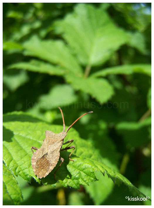 insecte dans mon jardin (mai2010)