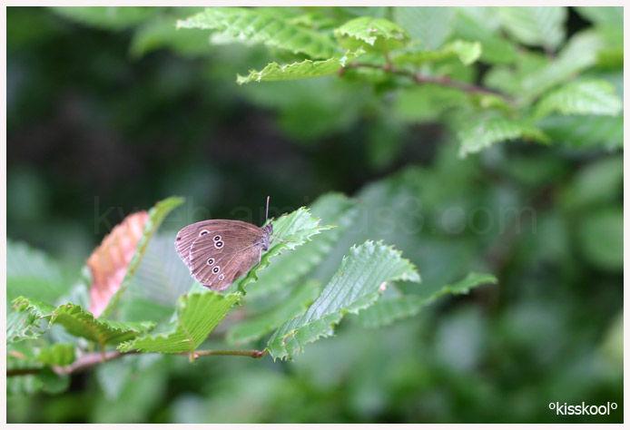ballade en forêt de Fontainebleau (juillet2010)