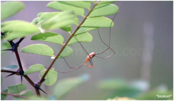 araignée forêt de fontainebleau (septembre 2010)