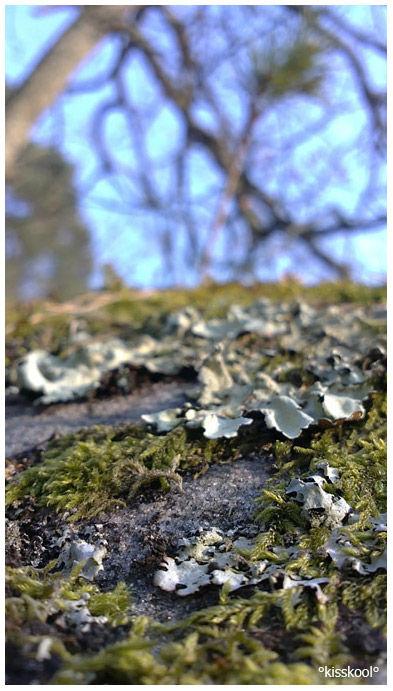 Rocher de Fontainebleau Mars 2010