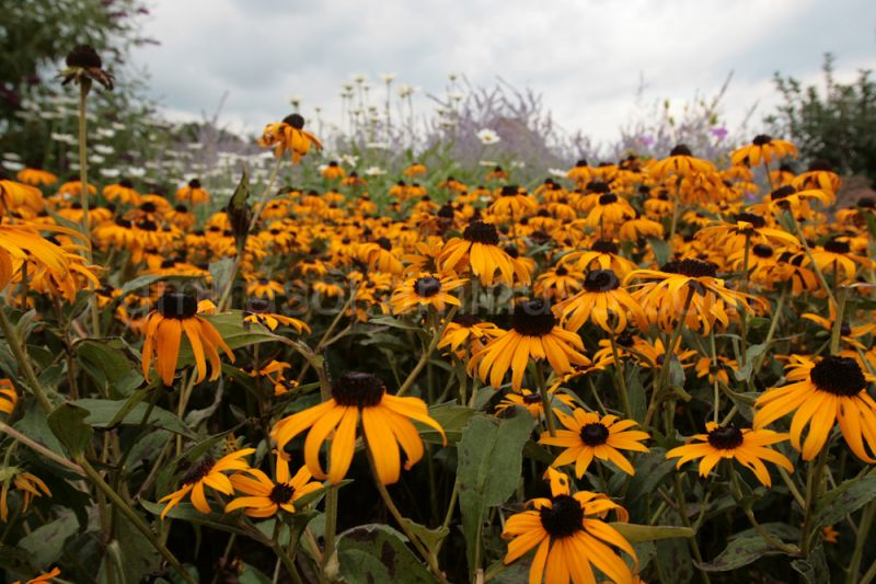Flower bed in Perennial Garden in Somerset, NJ