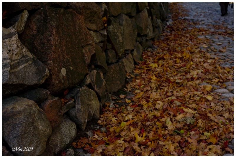 autumn leaves, stones