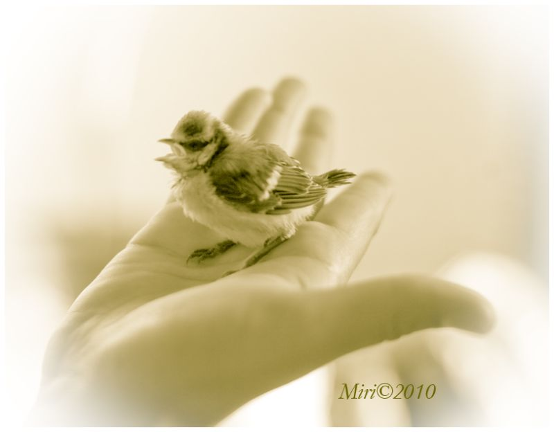 A little bird on the child's hand