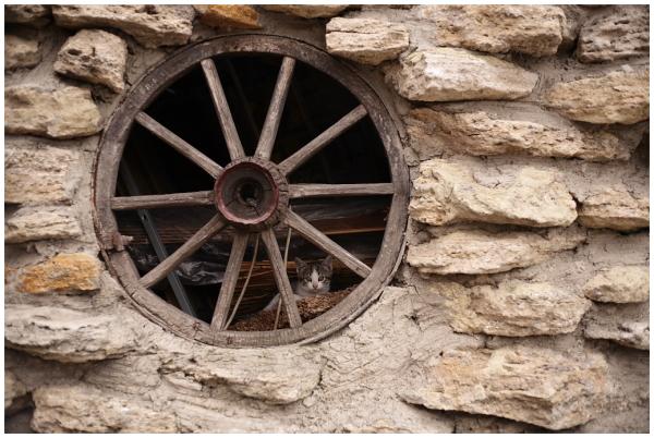 kitten in a wheel