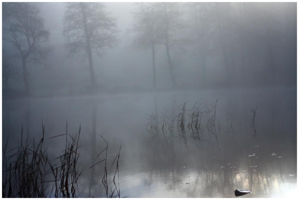 misty landscape, Horred, Sweden