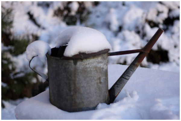 a jug filled with snow