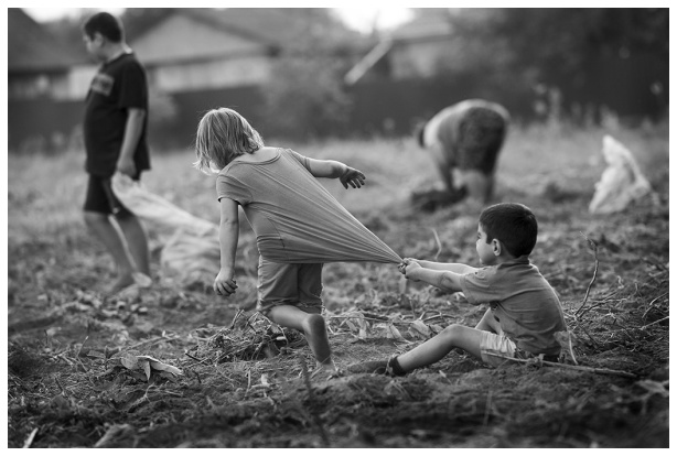 Field, work, potatoes and kids