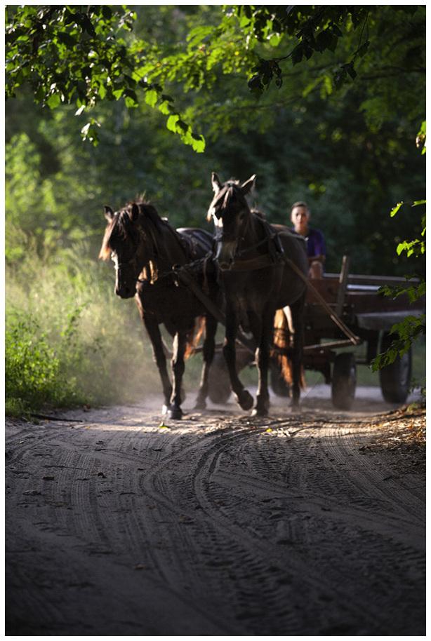 Aljosha and horses