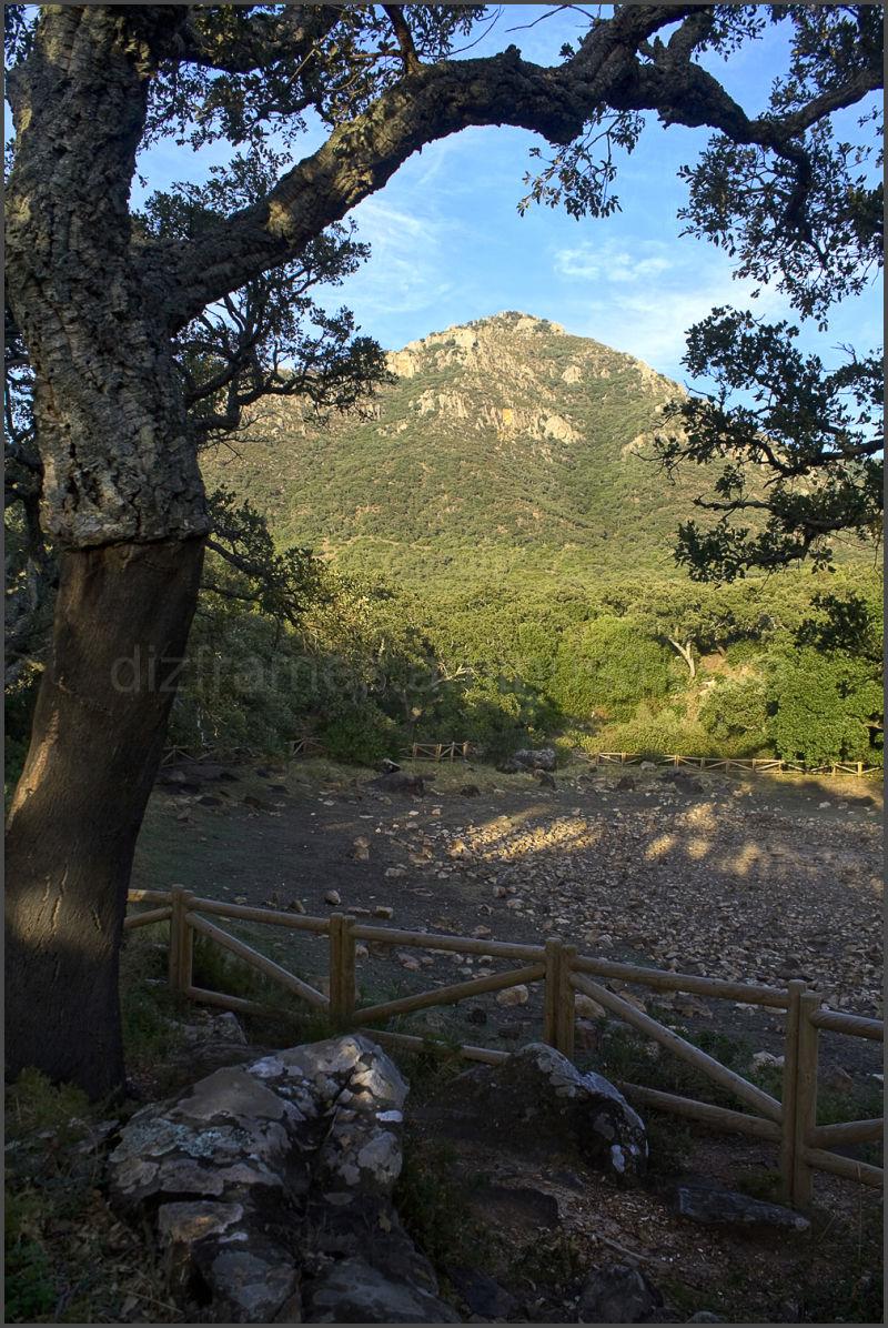 National Park of Los Alcornocales in Spain