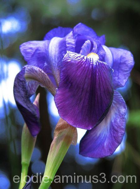 Aux couleurs du printemps