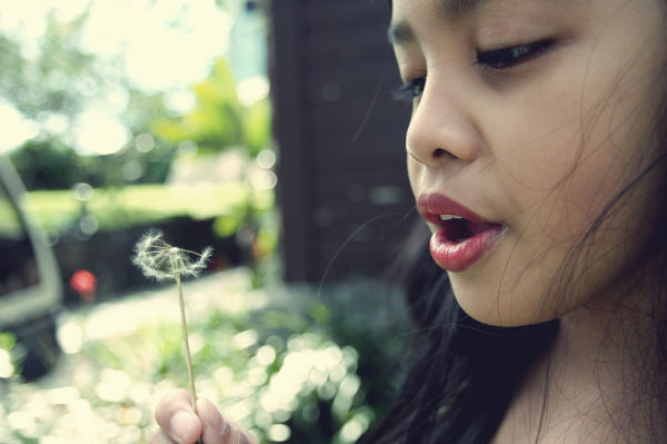 dandelion, blow