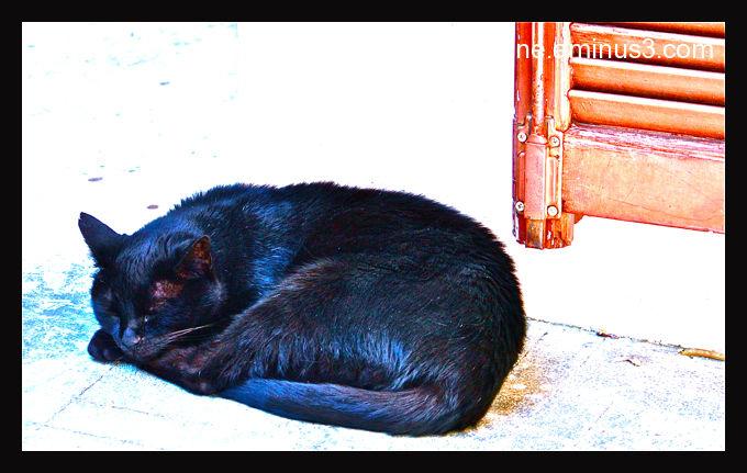 Chat à la persienne