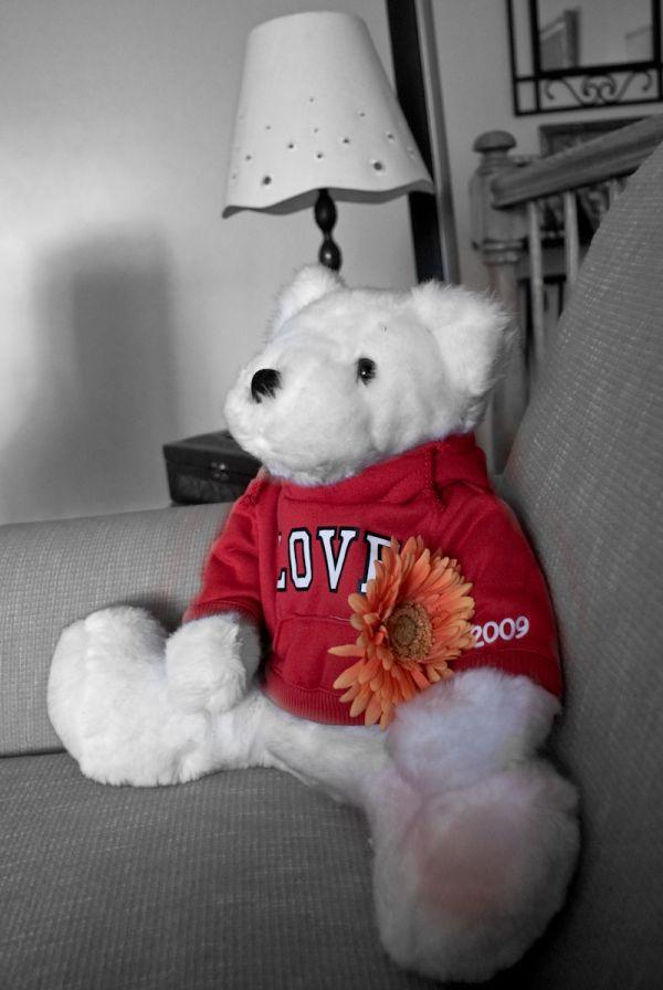 teddy love flower Valentine day