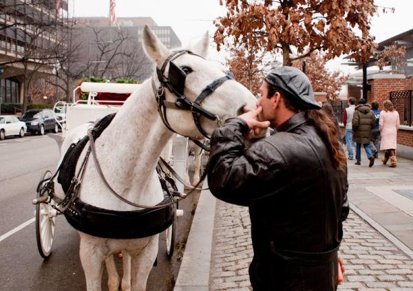 philadelphia PA Horse kiss