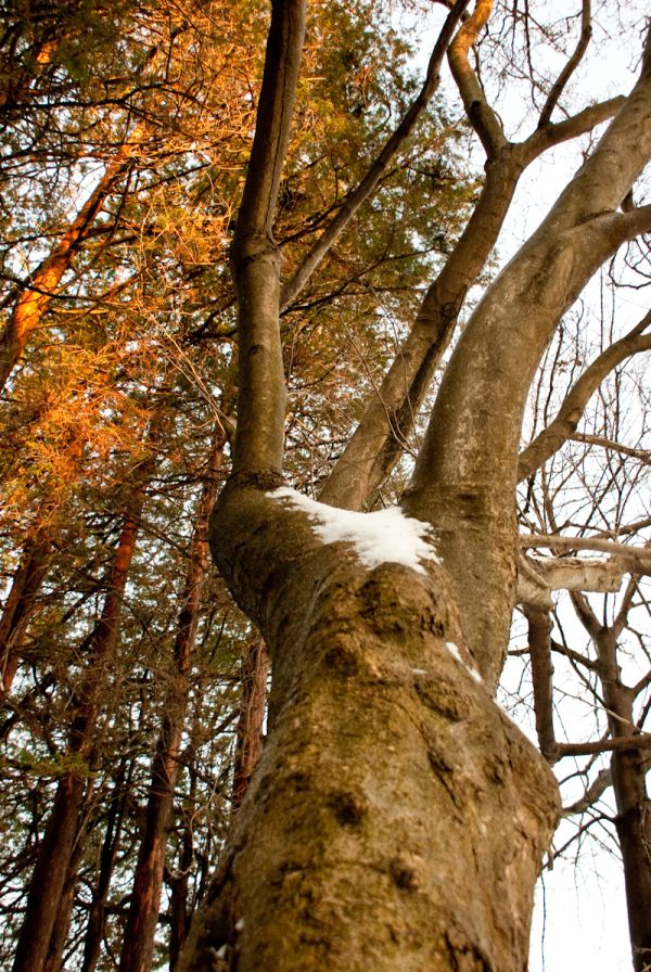 tree nature plant