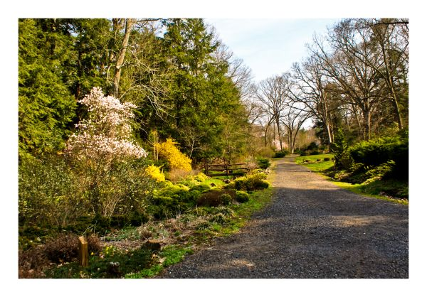 Garden landscape, flower