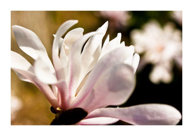 Monday Flower: Dogwood