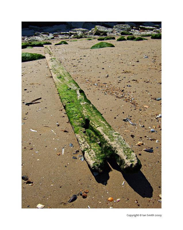 Driftwood on Huntanton Beach