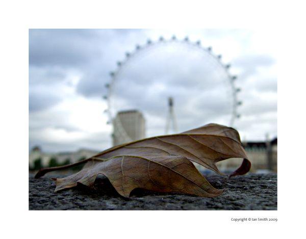 Autumn Leaf and London Eye