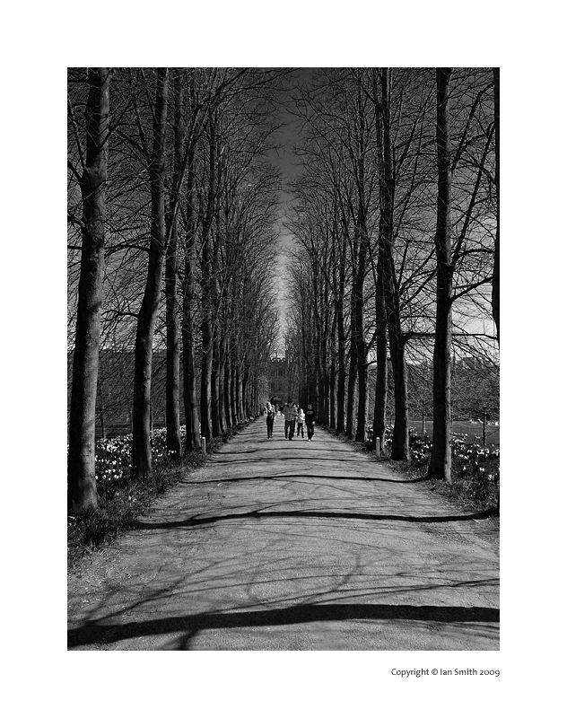 Tree lined entrance to Trinity College, Cambridge