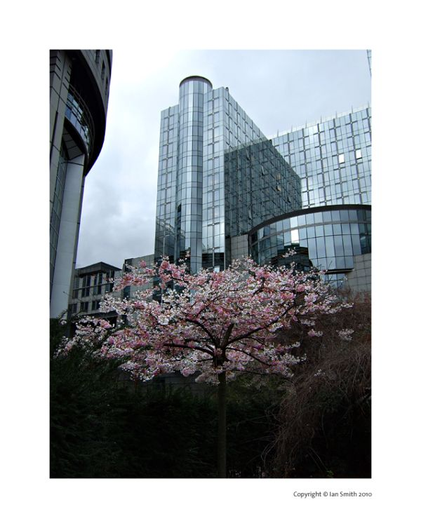early blossom, Brussels