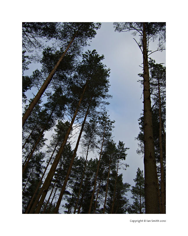Sandringham forest