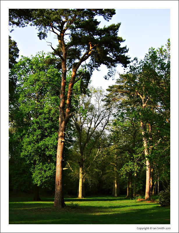 Sandringham Estate, Norfolk