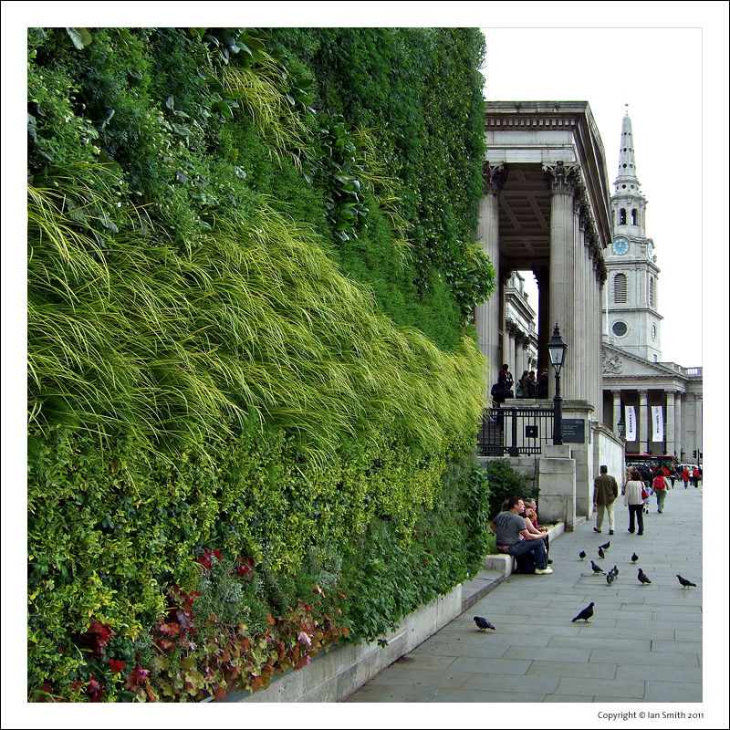 Grass wall Trafalgar Square