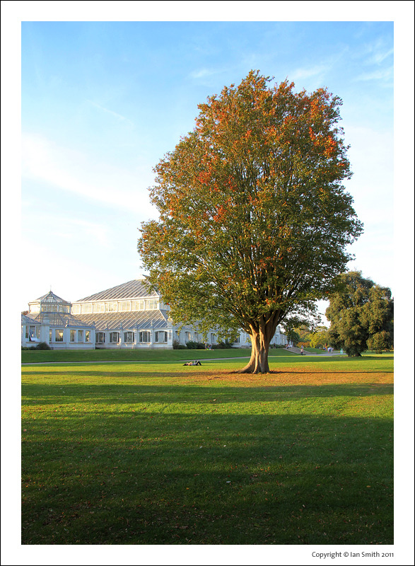 Sunsoaked tree in front of Temperate House, Kew