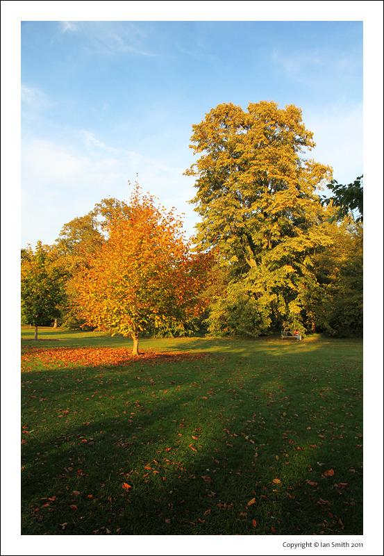 Sunlit trees at Kew Gardens