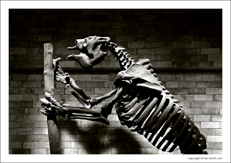 Dinosaur Natural History Museum London