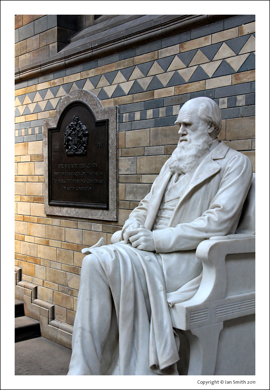 Marble sculpture of Charles Darwin