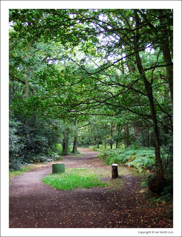 Walking along Chislehurst Common