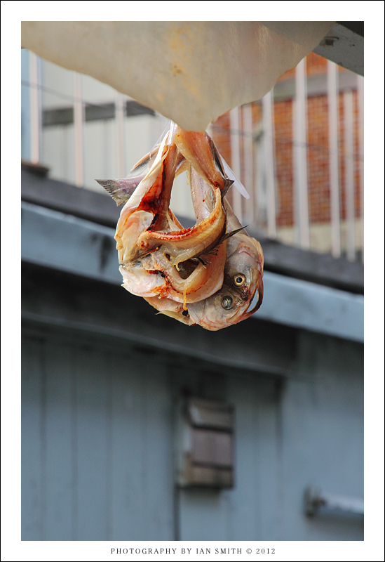 Fish hanging out to dry in Tai O
