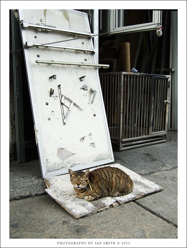 Cat outside an ironmongers, Tuen Mun