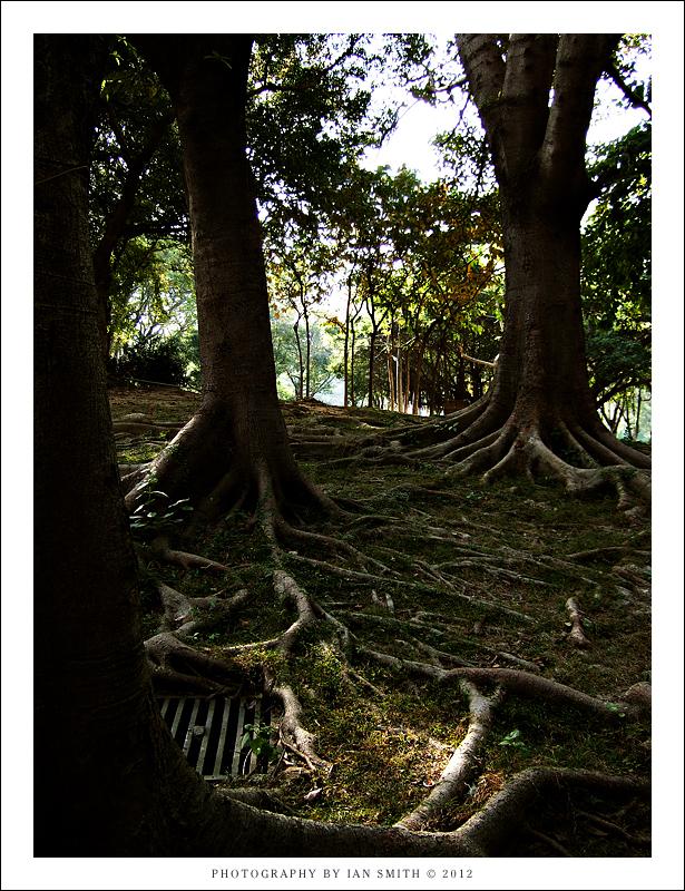 Trees in Tuen Mun Park
