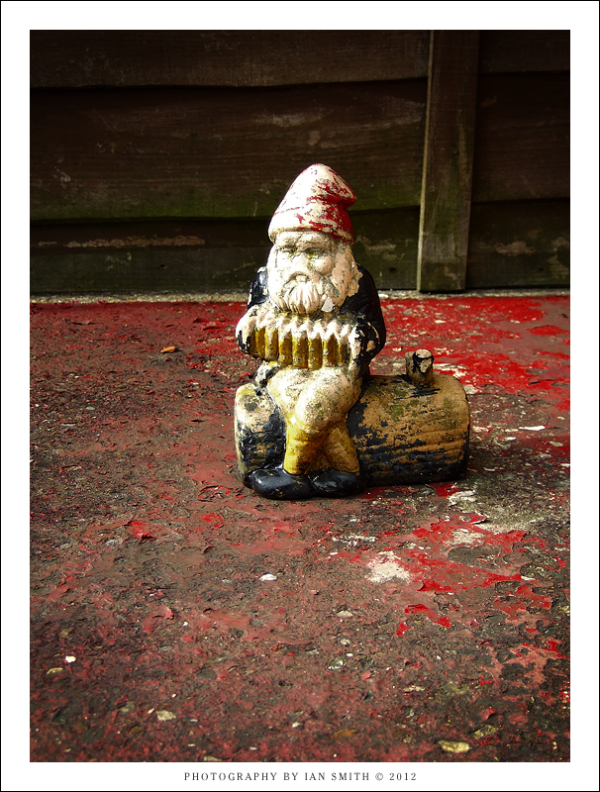 An old gnome in my garden