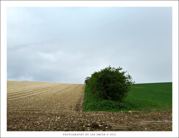 Two fields in Norfolk